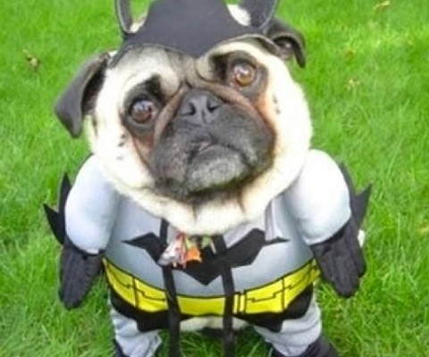 Just Leaked: Batman Movie Producer's Looking To Cast New Sidekick