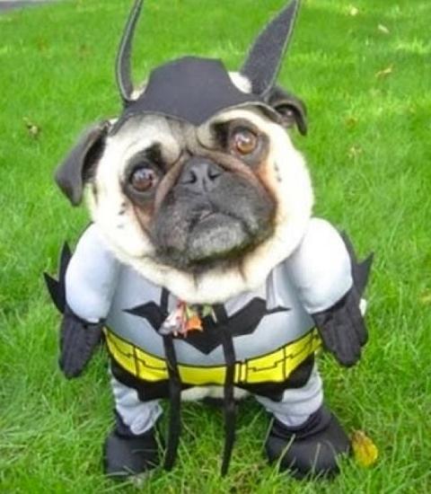new-batman-superhero-sidekick